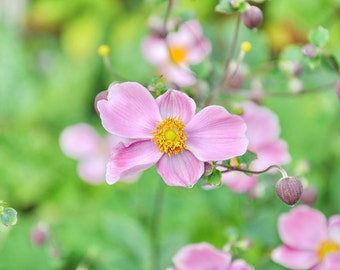 Pink Flower Photo, Pink Art for Girls, Pink Nursery Art, Anemone Photograph, Pink and Green Floral, Shabby Chic, Laundry, Bathroom, Bedroom
