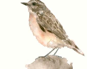 Bird Art Original Watercolor Artwork