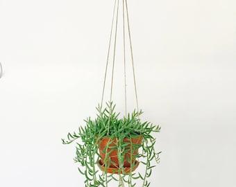 Twine Plant Hanger