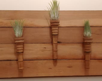 3 and Pine Air Plant Holder