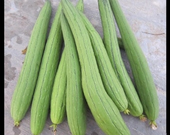 Asian Vegetable Edible Luffa seeds , long Smooth sponge gourd, Muop Huong .(20 seeds)