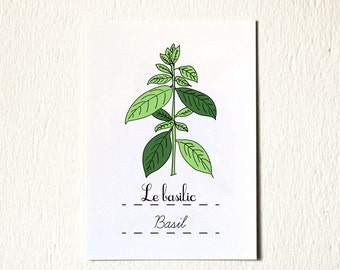 Eco Kitchen Art Print 'Basil' 5x7 herbs French Green Gift for Mom Gifts under 20