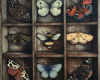 In The End Giclee Print - Butterflies, Moths, Bee, Curiosities - Natural History Print.