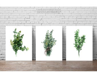 Thyme set 3 Fine Art Prints, Botanical Kitchen Wall Illustration, Thyme Bundle Watercolour Painting, Medicinal Plant Print Dining Room Decor