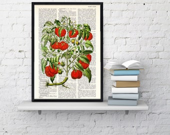 Vintage Book Print Dictionary or Encyclopedia Page Tomato Plant Botanical print on Vintage Dictionary Bookart BFL076