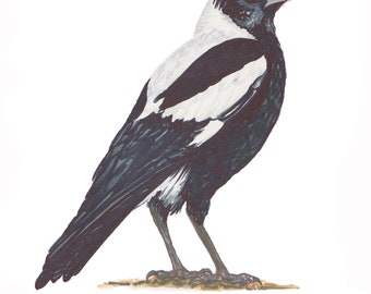 Australian Magpie Fabric Panel  Bird 100% cotton fabric. Bird. Sewing and quilting.