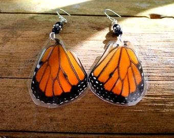 Real Butterfly Earrings, Monarch Butterfly
