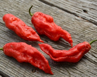 Ghost Pepper Seeds Bhut Jolokia Hot Pepper Seeds Organically Grown Hot Peppers Heirloom Peppers Non GMO Red Ghost Pepper Seeds