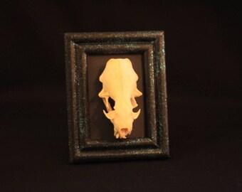 Mink Skull in Mini Frame