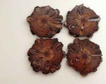 Hand Crafted...... Extra Large.....Luxury.... Australian Banksia Nut  Coasters..... x 4.....Hostess Gift.....