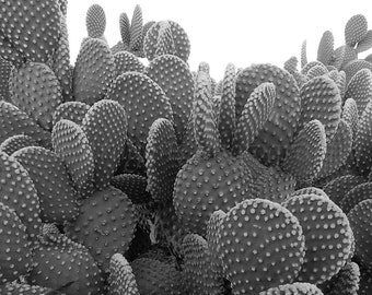 Black White Photography Cactus Print, Prickly Pear Cactus Photography,Black & White Print,Desert Print,Arizona Desert Art Nature Photography