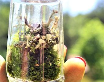 Tiny terrarium-Live moss & Lichen terrarium-Salt shaker terrarium