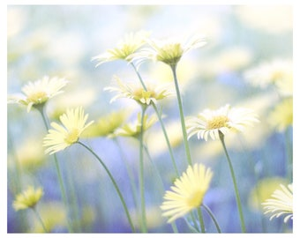 yellow daisies, flowers, daisies, botanical art print, floral home decor, nature photography, flower photography, flower wall art, 8x10
