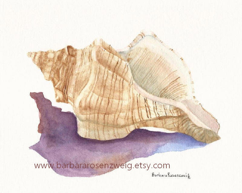 Seashell Painting Conch Shell Art Print Shell Watercolor