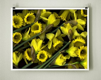 DAFFODILS - 8x10 Signed Fine Art Photograph