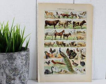 Français Antique imprimé Animal - animaux domestiques, animaux de compagnie d'impression, impression de chien, chat reproduction, impression de cheval, Cow print, affiche animaux Art Print Vintage, E416