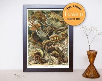 "Vintage illustration of lizards from Ernst Haeckel  - Framed fine art print, lizards  8""x12"" ; 11""x14"", FREE SHIPPING 278"
