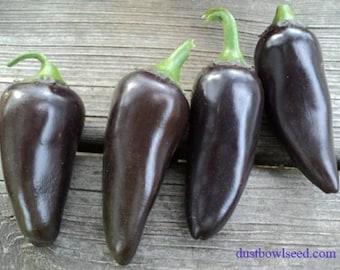 VPPHJ) PURPLE JALEPENO Hot Pepper~Seeds!!!!~~~~~~~Medium Heat!
