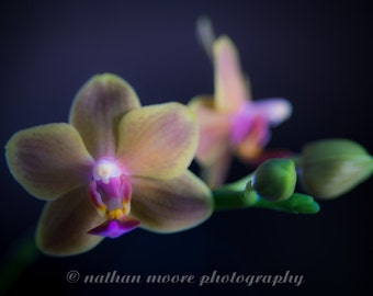 Very Special Orchid