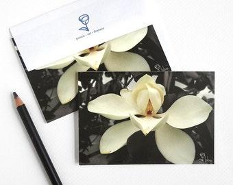 magnolia flower cards, botanical photograph card set, white flower invite, 5 blank cards and envelopes