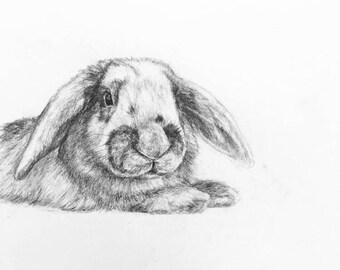 PET COMMISSIONS  - Custom pet portrait (pencil) - Professional animal portrait - Sizes available.