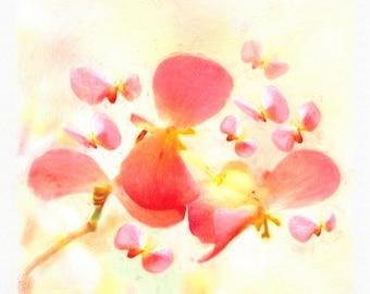 Begonia pink ,Photographic Art , Botanical Print , Fine Art , Flower , Nature , Giclee Print , Painting Effect , Art Canvas , Wall Art , 107