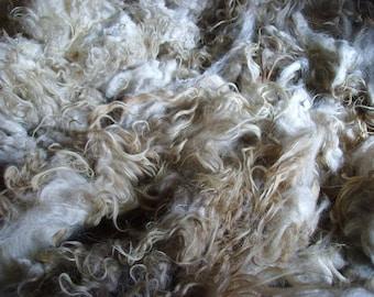 SPELSAU SHEARLING FLEECE / Raw Unwashed / Scandinavian Wool / Conservation Breed / Rare Breed / 1.8  kg  /63 oz /Spinning Knitting Felting