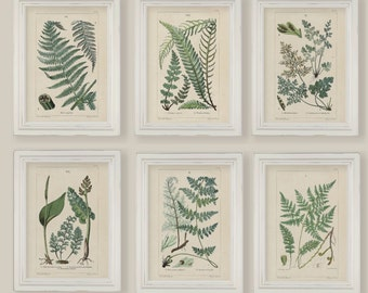 Set Of 6 Botanical Fern Prints Gallery Wall A4 or 5x7