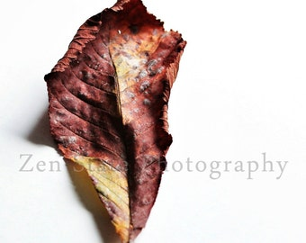 Fall Leaf Wall Hanging. Autumn Art Wall Decor. Nature Photography Print. Macro Photography. Unframed Photo, Framed Print, Canvas Print.