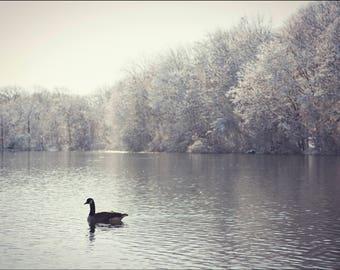 goose, 2016.