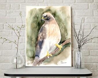 Hawk painting art print, Watercolor Wildlife artwork Falcon Bird of prey Ornithology wall decor Hawk
