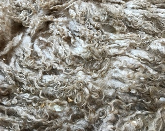 404w CORAL white RINSED Fleece Teeswater/Crossbred Raw