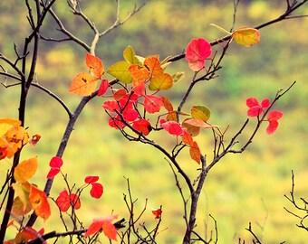 Fall Foliage Print, Red Leaves Print, Fall Print, Fall Photography, Fall Picture, Fall Trees Print, Fall Scenic Print, Autumn, Fall Photo