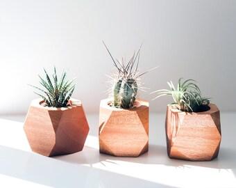 Geometric Air Plant / Succulent Pots - Set of 3 - Walnut, Maple & Mahogany