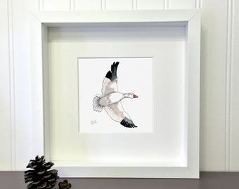 Snow Goose, 5 x 5 inches, Print of an original drawing, Migratory bird collection
