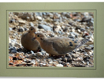Dove Photo Greeting Card - Mourning Dove Card - Blank Inside - Mourning Dove Note Card - Mourning Dove Card - Custom Bird Cards - Dove Gift