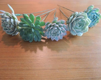 8 Wired Succulents
