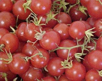 Heirloom Everglades Tomato Seeds - 20