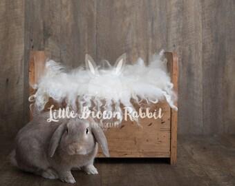 Rabbit Bed Newborn Digital Backdrop