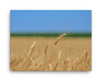 18x24 LowBeeTees Kansas Wheat Head Canvas