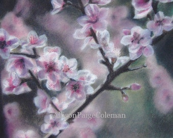 Matted 5x7 Pastel Print of Cherry Blossom Branch in White Double Mat