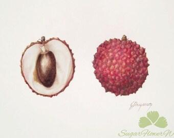 Lychee fruits, original unframed watercolour botanic art painting