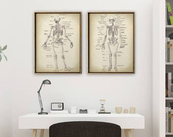 ANATOMY Print SET of 2, Anatomical Poster, Human Skeleton Print, Medical Print, Anatomy Chart, Antique Anatomy