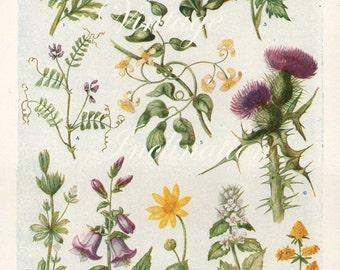 Vintage Antique 1930s Flowers botanical floral bookplate original lithograph art print illustration 4288 4287