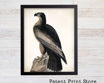 James Audubon Bird of Washington Art Print. Bird Print. Audubon Prints. Bedroom Art. Bird Artwork. Bird Print. Bird Art Print. Living Room.