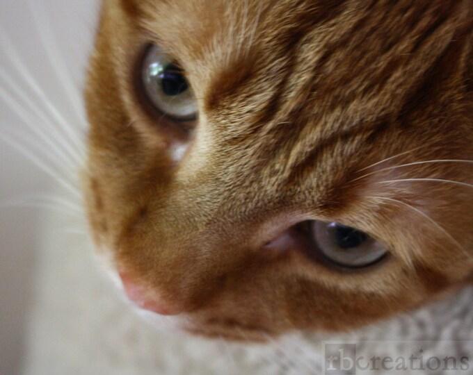 Beautiful Sweet Orange Tabby Cat Photograph Fine Art Print