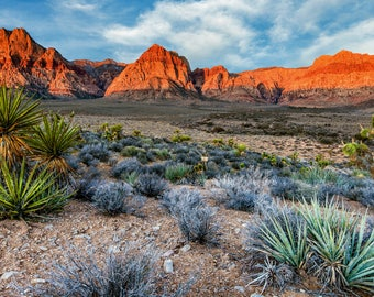 Red Rock Canyon Nevada Photography Print Las Vegas Fine Art Wall Art Decor | Also Available on Canvas or Metal