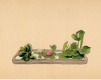 1935 IKEBANA JAPANESE FLOWER arrangement print original vintage botanical lithograph - lotus,  pond lily & candock in izumo ware - moribana