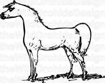 Equine Design   Arabian horse