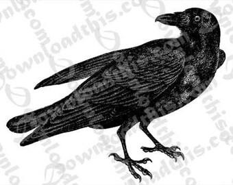 Raven Vintage Engraving Instant Download Transfer Sheet